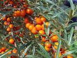 野生沙棘果精油 Wild Growth Sea Buckthorn Essential Oil