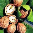 有機胡桃油 Organic Walnut Oil