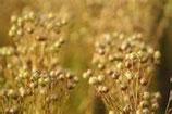 有機亞麻籽油Organic Flexseed oil