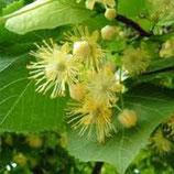 有機菩提花純露 Organic Linden Blossom Hydrosol