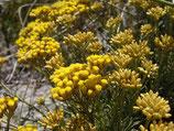 有機意大利永久花純露 Organic Helichrysum Hydrosol