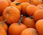 有機南瓜籽油 Organic Pumpkin Seed Oil