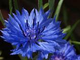 有機矢車菊純露Organic Cornflower Hydrosol