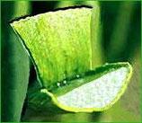 有機蘆薈膠 Organic Aloe Vera Gel