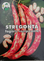 SCATOLA 250 g FAGIOLO STREGONTA RAMPICANTE