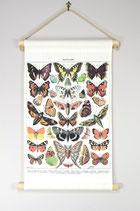 Vintage Rollkarte Schmetterlinge