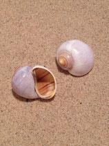 Bubble Shell (medium)