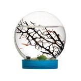 E'vivo écosystème marin à crevettes