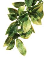 Exo Terra mandarin plante plastique S
