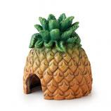 Ananas Exo Terra