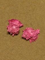 Pink Murex Rose Clair (large)
