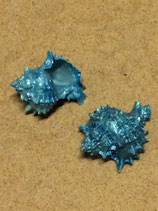 Pink Murex Bleu Clair (large)