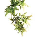 Exo Terra croton plante plastique S