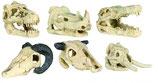 Aqua deco skull 8-11CM x6 pièces