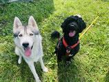 Seminar Hundebegegnungen im Alltag Teilnahme MIT Hund