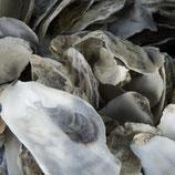 Japanische Austernschalen 5kg