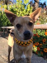 Halsband und Leine Set - Sonnenblume