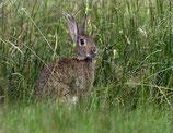 Kaninchen PREMIUM