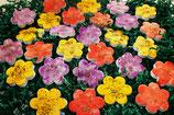 "Traueroblate® ""Blume des Lebens"""