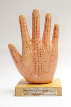 Hand-Modell