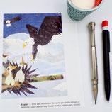 postcard A6 American eagle