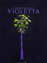 Fanbäumchen® Violetta