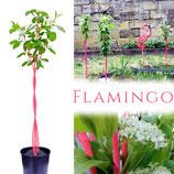 Fanbäumchen® Flamingo