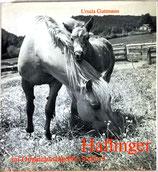 Guttmann Ursula, Haflinger im Originalzuchtgebiet Südtirol