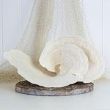 Turban Coral #3416