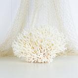 Bird's Nest Coral #3443