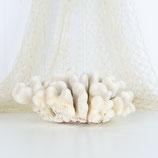 Soft Cauliflower Coral #3437