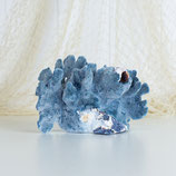 Blue Ridge Coral with Pink Barnacle #3418