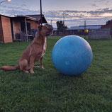 Sports canins : le mardi 10 mars à partir de 17h30