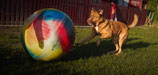 Sports canins :