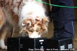 Sports canins : le samedi 7 mars à partir de 13h30