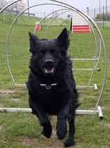 Sports canins : jeudi 26 mars à partir de 17h30