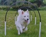 Sports canins : Samedi 29 février à partir de 13h