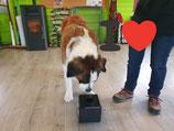 Sports canins : Jeudi 27 février à partir de 17h30