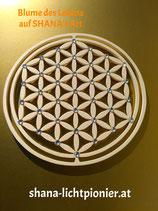 Blume des Lebens - NATUR-  10 bis 27 cm mit Acryldiamanten