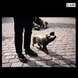 EA80 LP Schweinegott