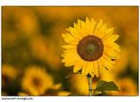 Faltkarte Natur 035