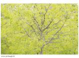 Faltkarte Natur 377