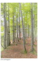 Faltkarte Natur 386