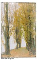 Faltkarte Natur 167