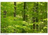 Faltkarte Natur 268