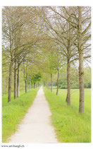 Faltkarte Natur 265