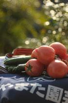 トマトきゅうり詰め合わせ2kg箱