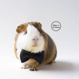 Bow Tie For Guinea Pig - black
