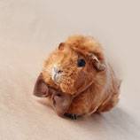 Bow Tie For Guinea Pig - Brown