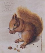 Brillenputztuch Eichhörnchen
